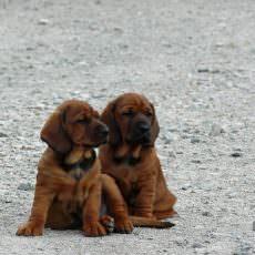 NN7 zwei Freunde